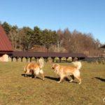 ホテル凛香リゾート・富士山中湖に宿泊。〜犬も人も満足できる旅行へ〜[犬連れ旅行]