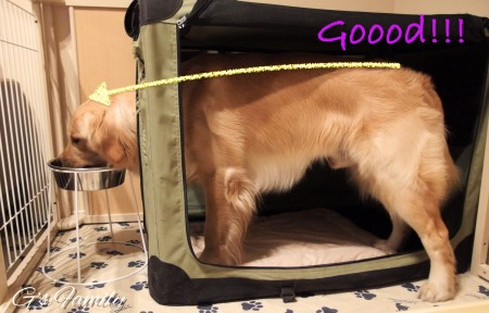 大型犬用食器とフードスタンド
