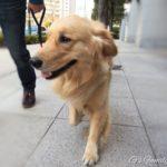 【ペット博2017 パシフィコ横浜】はじめて犬同伴で一緒にイベントへ。