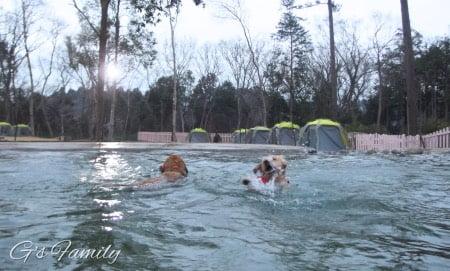 小谷流の里ドギーズアイランド・大型犬プール