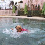 【小谷流の里ドギーズアイランド 】大型犬用プールと日帰り情報まとめ