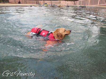 小谷流の里ドギーズアイランド中型・大型犬プール