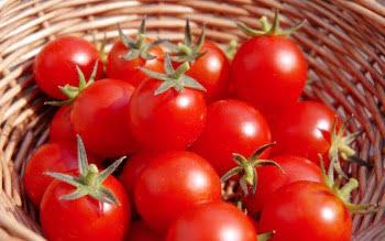 犬にトマト