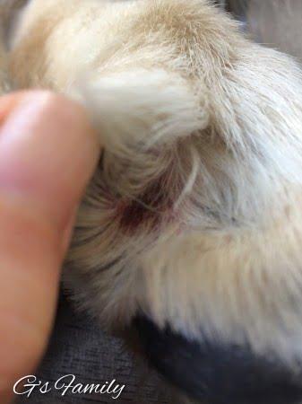 アポキル錠2017年1月指間炎の写真