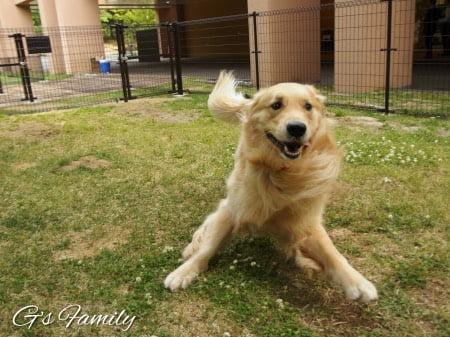 レジーナリゾート蓼科のウェルカムドッグラン大型犬