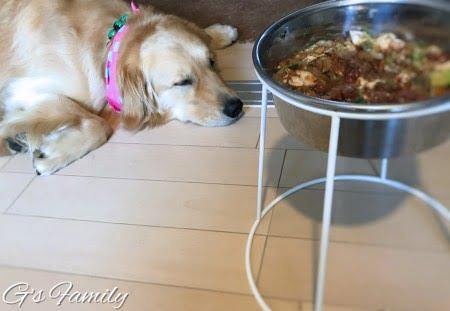 セナ犬の手作り食暑い夏