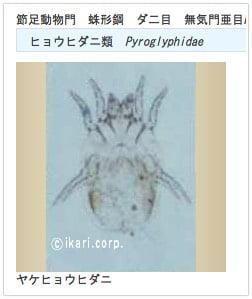 IgEアレルゲン検査ヤケヒョウダニ