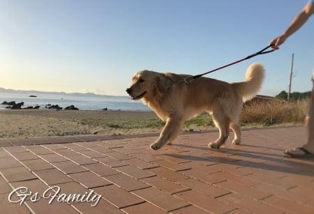 三浦海岸アレーナでの海散歩