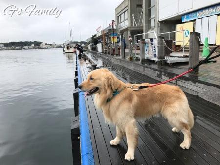 犬連れ三崎港