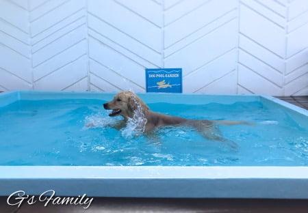 三浦海岸アレーナのドッグプールで泳ぐセナ
