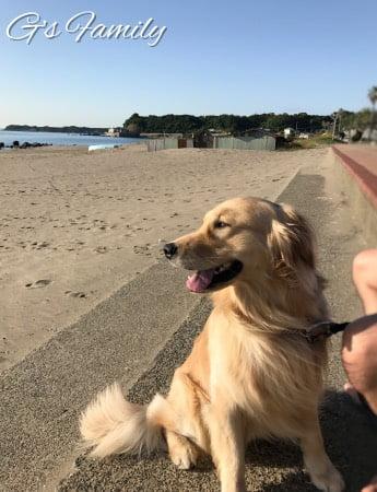 三浦海岸アレーナで海散歩