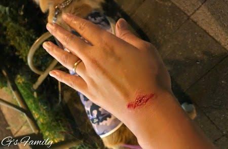 犬と散歩中に野良猫に襲われた