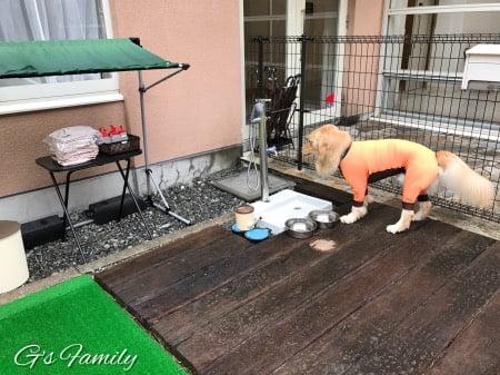 レジーナリゾート蓼科の中庭ドッグラン