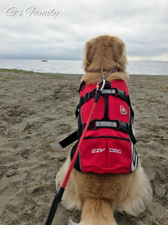 犬と海遊び