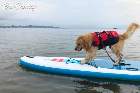 海で犬とSUP