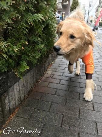 大型犬のレインコート・アルファアイコン