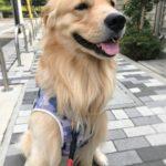 犬の足びっこひき治療 ( 1 ) 動物病院でのレントゲン撮影と費用