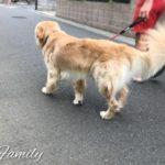 犬の足びっこひき治療 ( 2 )犬が足をびっこ引いた場合に疑う14の主な原因リスト