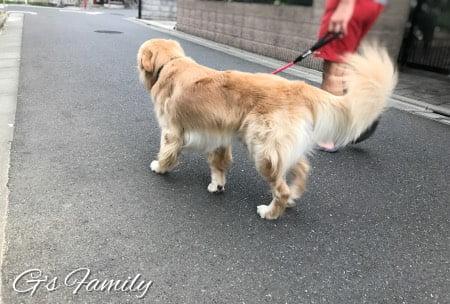 びっこ ひく 犬