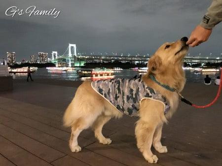 愛犬との写真トレーニング