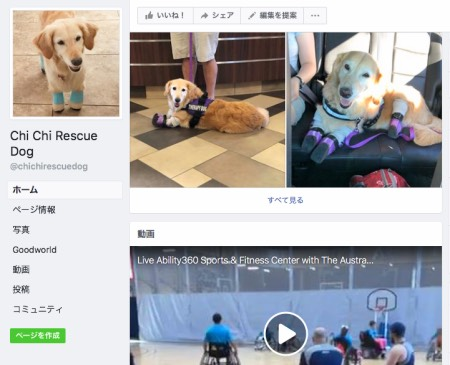 Chi Chi Rescue Dog_Golden Retriever