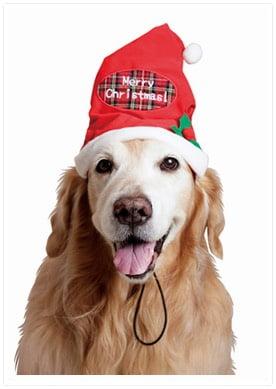 大型犬用クリスマスハット