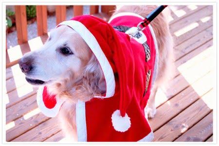 大型犬用クリスマスマント