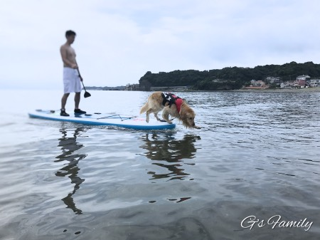 犬と海でSUP