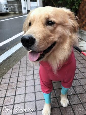 アルファアイコン大型犬のレインコート