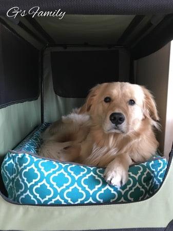 大型犬ベッドとクレートp.l.a.y