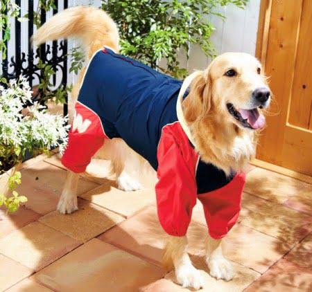 ペピイの大型犬レインコート