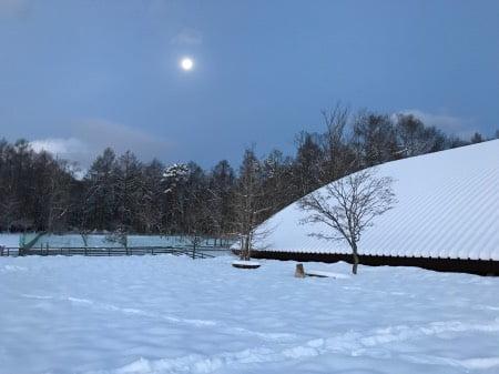 山中湖ドッグリゾートワフ・雪遊び