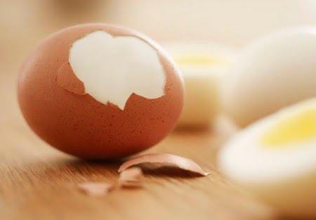 卵の殻犬が食べれる