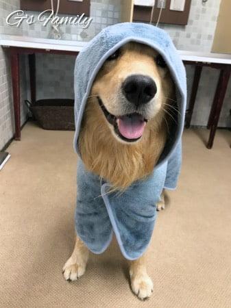 犬用バスローブ