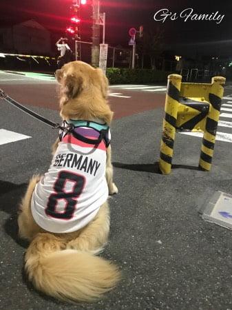 大型犬の犬服(サッカーユニフォーム)