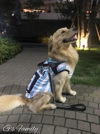 大型犬の犬服