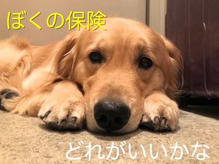 大型犬のペット保険選び