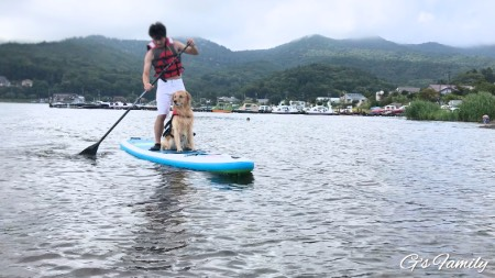 犬とSUP