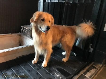 はんなり伊豆高原犬用露天風呂