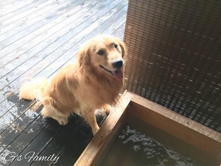 はんなり伊豆高原・犬用露天風呂