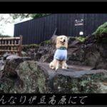 愛犬と温泉旅館で休日を。はんなり伊豆高原に宿泊。[犬連れ旅行]