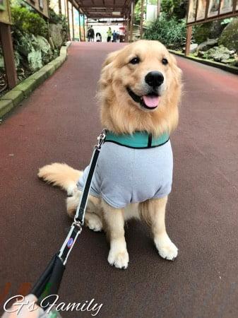 伊豆シャボテン動物公園(犬連れ)