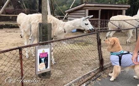 犬連れ伊豆シャボテン動物公園