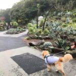 伊豆高原を犬と楽しむ。愛犬の駅と伊豆シャボテン動物公園[犬連れ旅行]