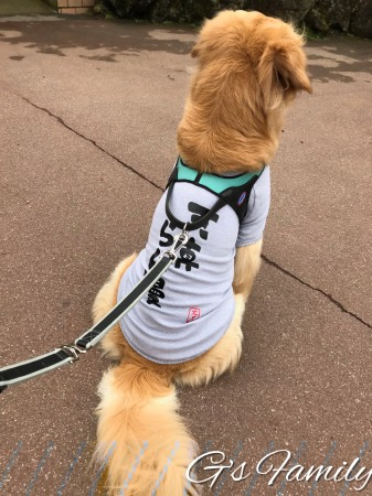 大型犬の名入れ服サイズ感