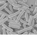 抗生物質フラジールの処方( 1 )クロストリジウム菌[犬のIBD]
