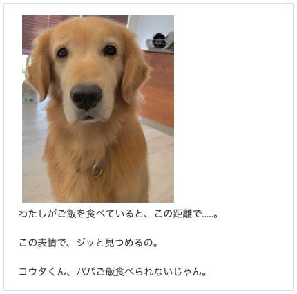 坂上忍さん家のゴールデン・レトリーバー、平塚コウタくん