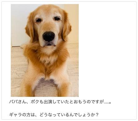 坂上忍さんのゴールデン・レトリーバー「平塚コウタ」くん