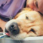 犬の内視鏡検査