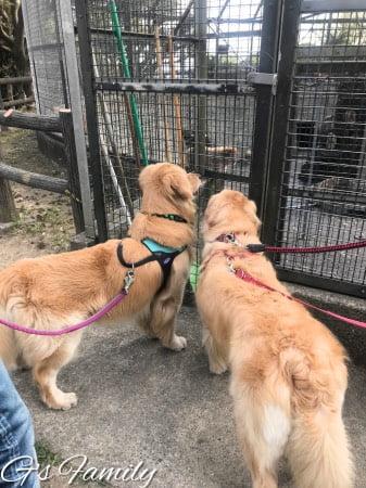 披露山公園で犬と猿